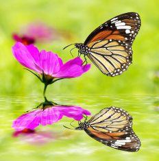 butterflysmall