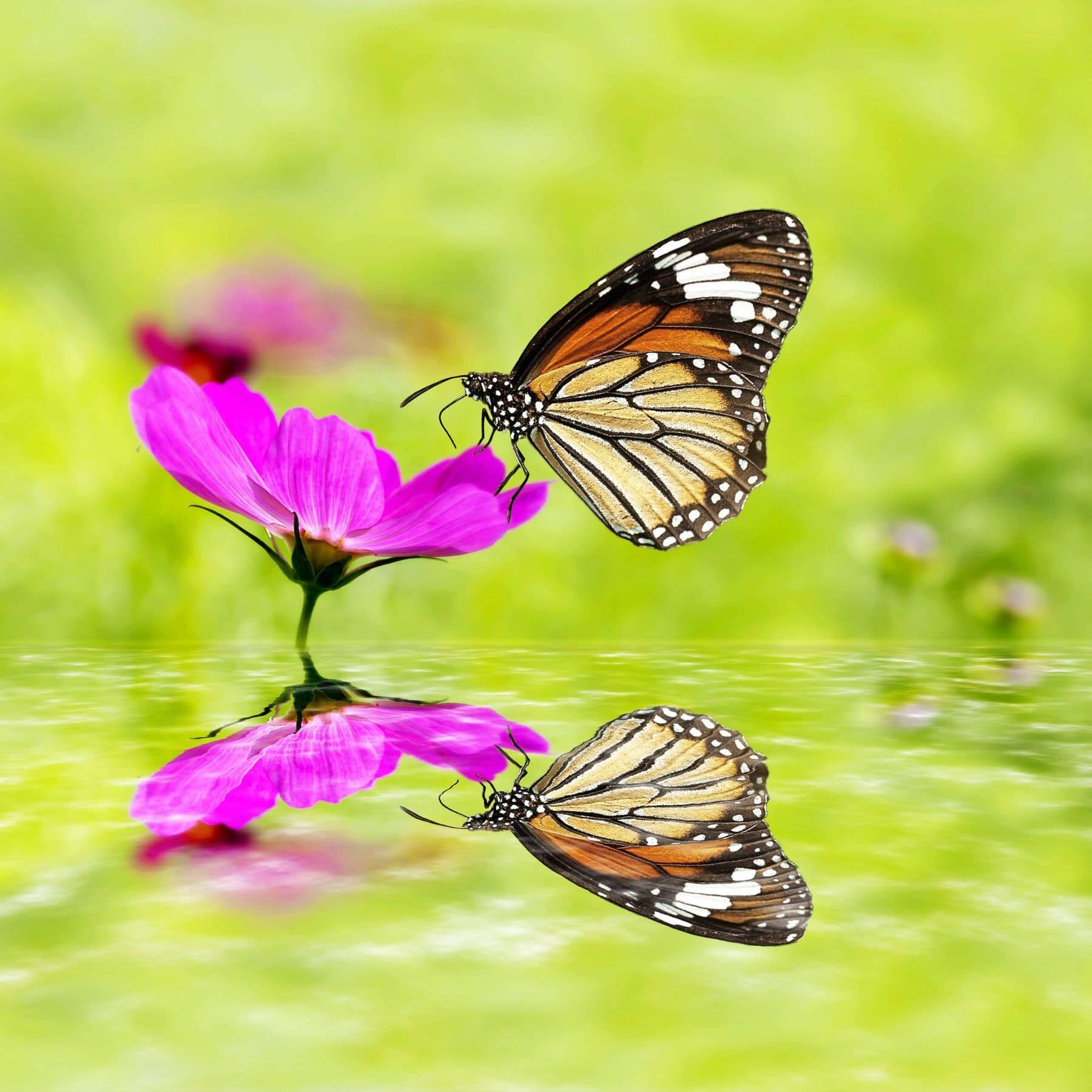 16766325 - butterfly sitting on green grass field with flowers with nice reflection